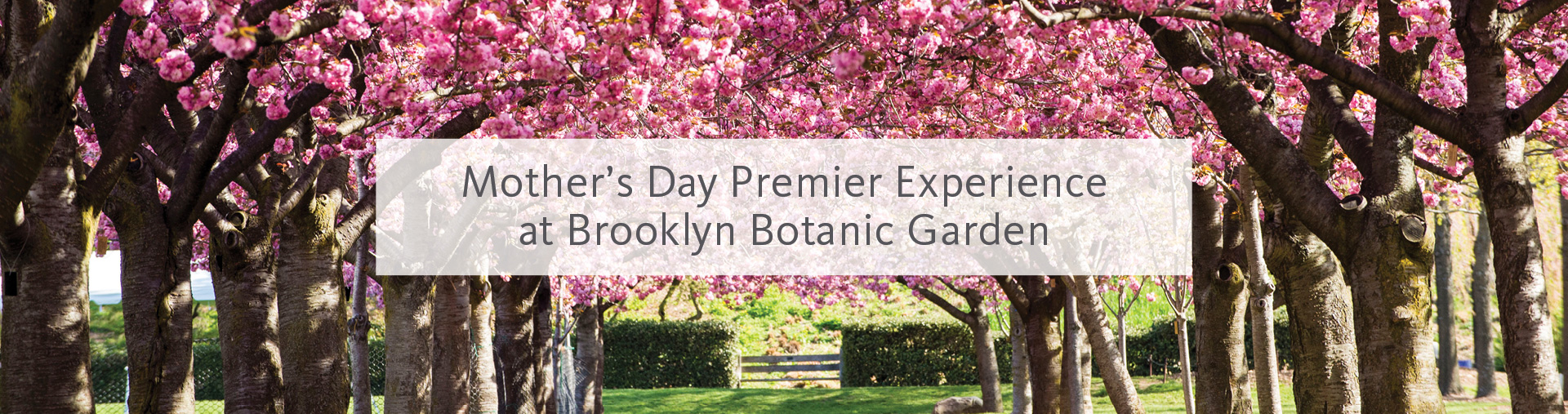 Mother's Day Premier Experience at Brooklyn Botanic Garden